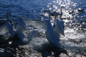 とうふつ湖